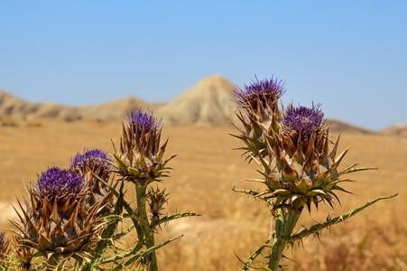 Fiore deserto